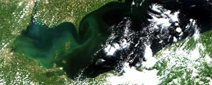 Blue-green algae - Lake Erie